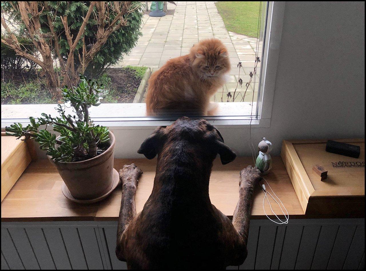 ringo-cat.jpg