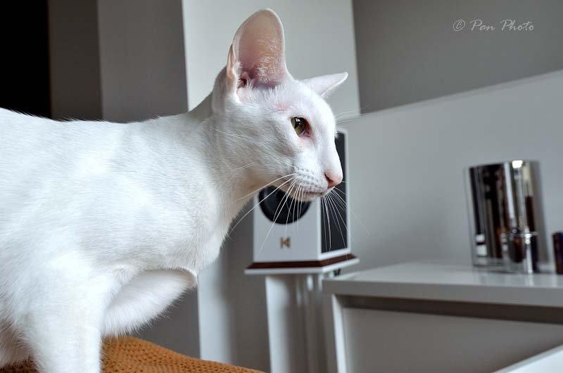 Hifi-cat-SpeakerDSC_5536_10608_003628.JPG