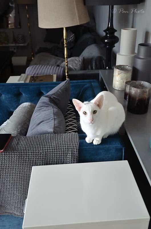 Hifi-cat-SpeakerDSC_5540_10612_003631.JPG