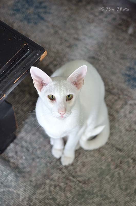 Hifi-cat-SpeakerDSC_5558_10630_003641.JPG